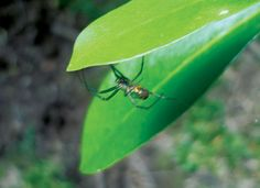 aranha tecendo entre folhas