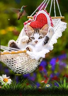 Kittens Cutest, Cats And Kittens, Cute Cats, Beautiful Birds, Animals Beautiful, Cute Baby Animals, Animals And Pets, Mr Chat, Good Night Prayer
