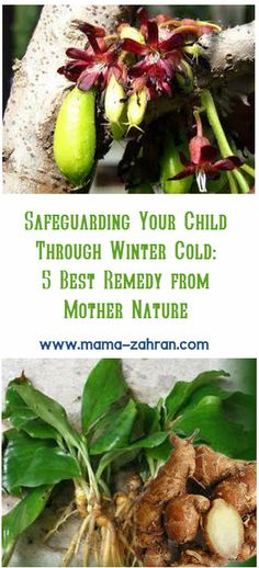 So, about cold. I have  been taking notes for what works and what doesn't for Zahran when it comes to natural remedy. I know there are lots already talking about this, and everyone has their own favorite winter pick-me-up. But as I said, these 5 mother nature's gifts are passed through generation in my family, I tested them personally, and they might work as well for your little one. http://mama-zahran.com/safeguarding-your-child-through-winter-cold-5-best-remedy-from-mother-nature/