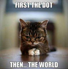 Kitten takes on the world=]