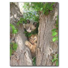Two Cute Kittens on a Tree Postcard