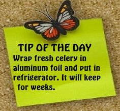 Tip of the Day.  Wrap fresh celery in aluminum foil and put in in refrigerator. It will keep for weeks.