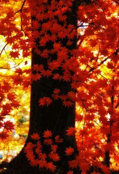 Orange autumn by Haru Digital phot on 500px