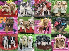 Puppy Pals | Adult Puzzles | 2D Puzzles | Shop | US | ravensburger.com