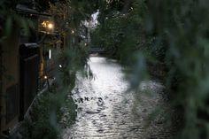 京都・白川。柳の葉とともに。 京都 kyoto gion