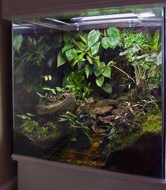 Gecko Vivarium, Gecko Terrarium, Terrarium Reptile, Aquarium Terrarium, Terrarium Plants, Reptile Room, Reptile Cage, Les Reptiles, Reptiles And Amphibians