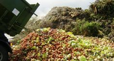 French supermarkets will be banned from throwing away or destroying unsold food and must instead donate it to charities or for animal feed, under a law set to crack down on food waste. French Supermarkets, Food Poverty, Waste Solutions, Gastro, Food Security, Edible Food, American Food, Food Waste, Food Industry