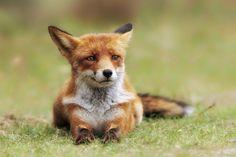 Fox look by VictorCarpentier