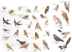 Symfonie a capella gedicht Animal Plates, Plant Insects, Different Birds, Miniature Plants, Bird Illustration, Fauna, Bird Watching, Bird Art, Pet Birds
