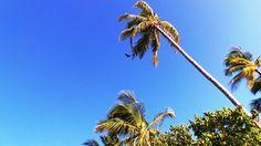 Hilton Irufushi in South Maldives - hello from bat