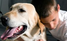 New Ohio Law Protects Pets From Domestic Violence