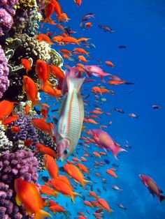 The astonishing beauty of the Incredibly intricate & colorful sea world