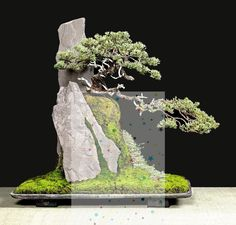 Bonsai styles are different ways of training your bonsai to grow the way you want it to. Get acquainted with these styles which are the basis of bonsai art. Small Artificial Plants, Artificial Plant Wall, Artificial Flowers, Big Plants, Cool Plants, Indoor Plants, Bonsai Garden, Garden Trees, Garden Plants