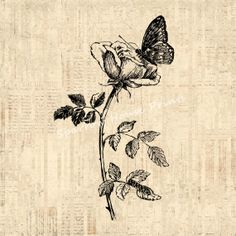 Vintage Butterfly and Rose Wall Art Flower by SparrowHousePrints, $12.00