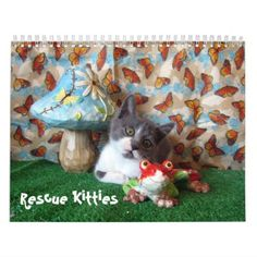 Rescue Cat / Kitten Calendar - Encore Edition - cat cats kitten kitty pet love pussy