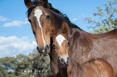Daily Blog | That Herd | Horses Being Horses | Page 2