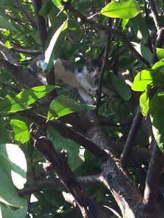 Plant Leaves, Cats, Animals, Pets, Gatos, Animales, Animaux, Animal, Cat
