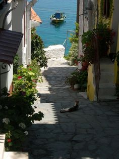 Cat enjoying the stunning view over the ocean on the Greek island Samos / alley / Greece / boat / seaside / cat sleeping in the shade / sunshine