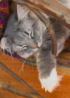 Cat Asleep In A Wooden Rocking Chair Greeting Card For Sale By Louise…