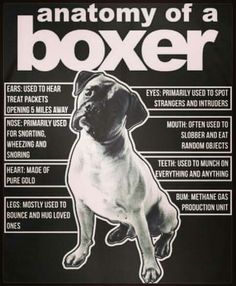 "Figure out more information on ""Boxer Puppies"". Have a look at our internet site. Boxer Mom, Boxer And Baby, I Love Dogs, Puppy Love, Boxer Breed, Akita Dog, Cat Dog, Funny Dogs, Funny Boxer Puppies"