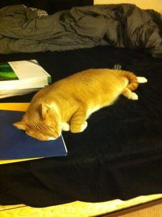 Ill take a nap then study