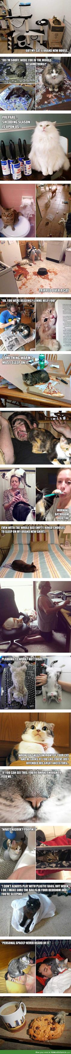 Struggles only cat owners will understand