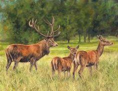 Red Deer Family by David Stribbling