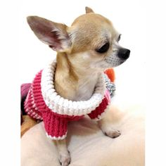 Handmade Crochet Dog sweater by autumn. Dachshund Clothes, Chihuahua Clothes, Cute Chihuahua, Puppy Clothes, Chihuahua Puppies, Crochet Dog Sweater, Dog Sweater Pattern, Crochet Pet, Crochet Pattern