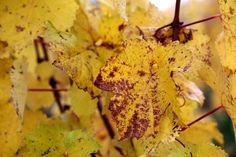 November Blues | #wine_passion | #wine_passion