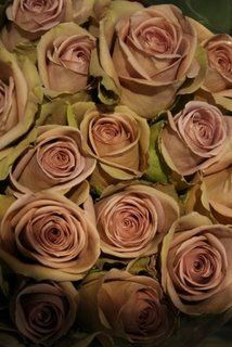 Today the shop is full of my favourite vintage roses in preparation for tomorrows wedding. The Hound and I have boogied to an eclectic mix . Wedding Bouquets, Wedding Flowers, Wedding Fun, Wedding Ideas, Amnesia Rose, Happy Animals, Green Garden, Different Textures, Vintage Roses