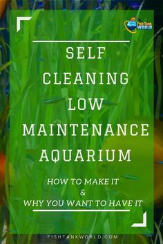 Self Cleaning Aquarium. How to make a self-sustaining aquarium biosphere, How They Work, how to stock it and why you may want a Self Cleaning Low Maintenance Aquarium. #fishtank