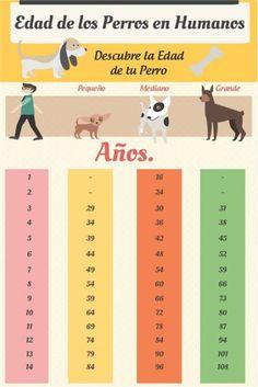 Grupo Caridad Perú: Cómo calcular la edad REAL del perro en años humanos.