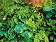 7-maravillosas-plantas-que-crecen-bajo-la-sombra-01