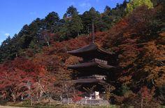 金剛院は舞鶴市の東部にあり、紅葉の名所として、そして「三重塔」のある寺として知られています。