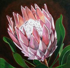 Protea Art Print by Jacqui Simpson Protea Art, Flor Protea, Protea Flower, Art Floral, Watercolor Flowers, Watercolor Art, Watercolor Illustration, List Of Paintings, Oil Paintings