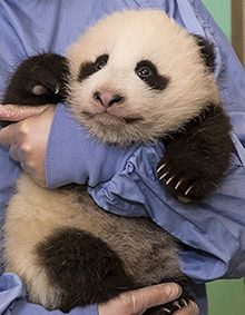 Vote for a name for the new baby at San Diego Zoo