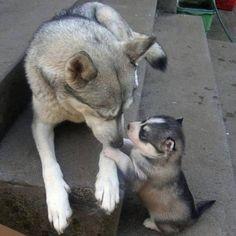 Anne ile yavru köpek