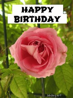 Happy Birthday Rose Gif Happy Birthday Rose, Birthday Roses, Birthday Tags, Happy Birthday Greeting Card, Good Night Image, Inspirational Quotes, Stars, Flowers, Plants