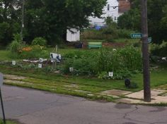 Georgia Street Community Garden, Detroit
