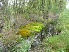 Oosterse bos bij Emmen Neem wel goede schoenen of laarzen mee als je hier naar toe gaat. Het is drassig.