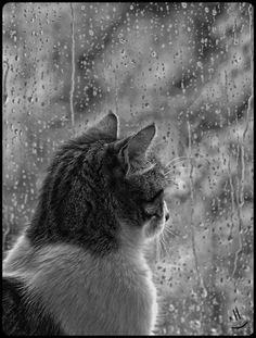 mistymorrning: watching the rain… by LoveSumer