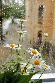 Rainy Days and blooming sunshine ❤️ Rainy Day Photography, Rain Photography, White Photography, Flowers Nature, Wild Flowers, Beautiful Flowers, Beautiful Places, Landscape Wallpaper, Nature Wallpaper