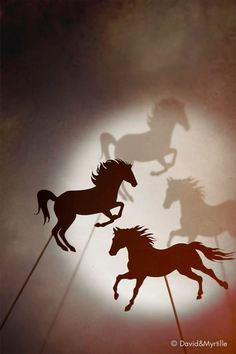 The Shadow Race by David et Myrtille / BookCover Designer dpcom.fr