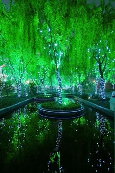 Amazing Magic Forest in Shanghai, China