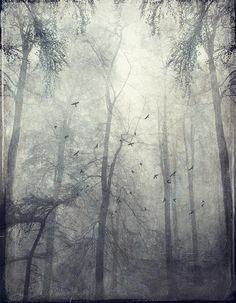 Twisted Trees by Dirk Wuestenhagen