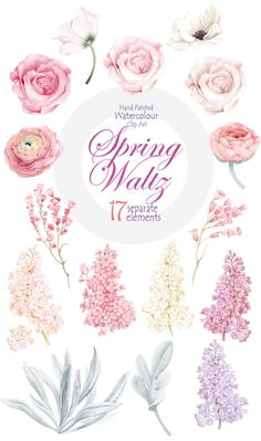 Watercolour Clipart collection Flower elements branch of