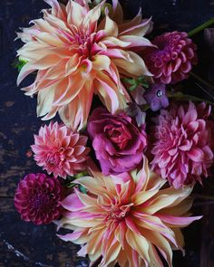 Dahlias 'Tam Tam', 'Connie Margaret', 'Mystique', 'Labyrinth' and 'Mission Gypsy' with Hot Cocoa rose and Hot Chocolate Nicotiana. Cut Flowers, Beautiful Flowers, Dahlia Flowers, Flower Farm, Zinnias, Planting Flowers, Flowers Garden, Floral Arrangements, Plants