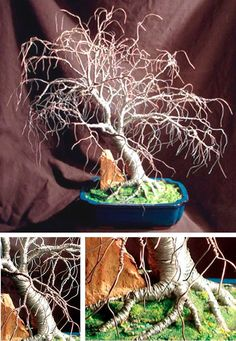 """Hickory in Blue Base Wire Tree Sculpture, Original by Sal Villano 17""""H x 18""""W x 16""""D. Created using 24, 26, 28 galvanized steel wire. This tree sculpture has a solid trunk and large root system necessary to support the many upper branches. An antique clay brick fragment is set in among the roots for added color and texture. The roots are bonded in sea sand mixed with pebbles then permanently planted in a rectangular glazed blue container. The sea sand mixture is painted in several layers of…"""