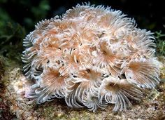 Beauty of the underwater world (38 photos)