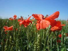 Flowers, Bornholm